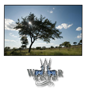 Thanks to the 830 acers and exotic animals, Waggener Ranch offers ranch living without all the ranch work.